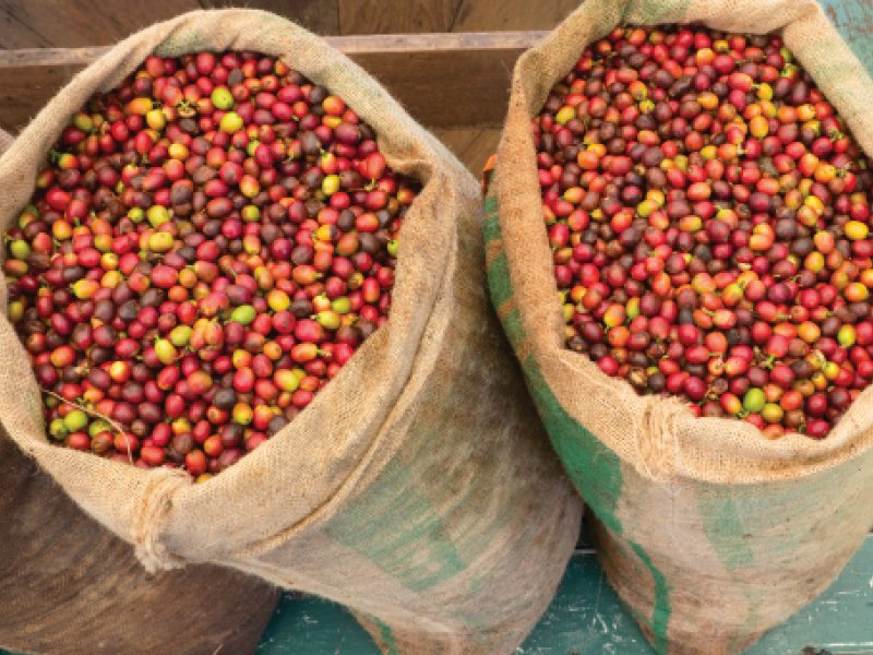 Kona Coffee | Hawaii Island