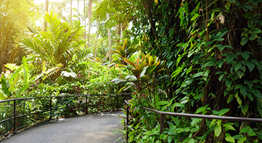 Botanical Gardens | Hawaii Island