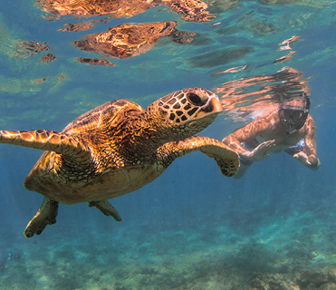 Snorkeling and seeing turtle