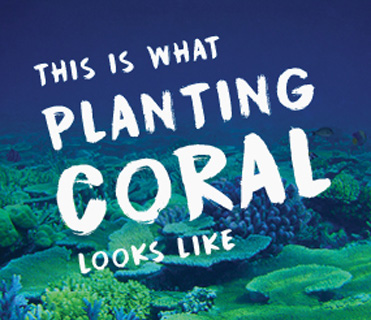 What does Coral Planting look like?