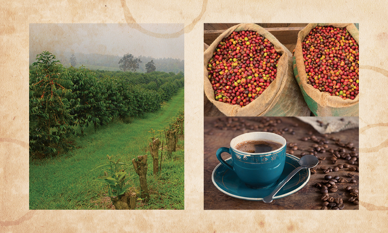 Kona Coffee | Hawaii-grown coffee